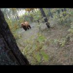 Fahrradfahrer versucht, einem Bärenangriff zu entkommen