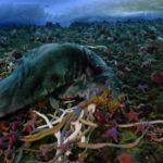 Fleischfressende Seesterne in Zeitraffer