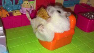 Hamster sitzt auf kleinem Sessel und isst Apfelkuchen