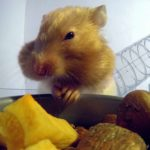 Hamsterbackentaschen geröntgt