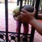 Hoofd vast in hek