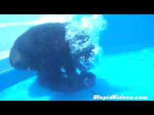 Chimp in diving