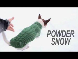 Hvorfor ikke køre Chihuahuas gennem sneen?