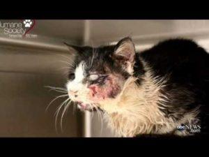 Zombie Katze steigt aus ihrem Grab