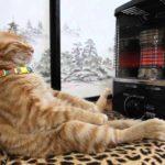 Katt kopplar av framför värmaren