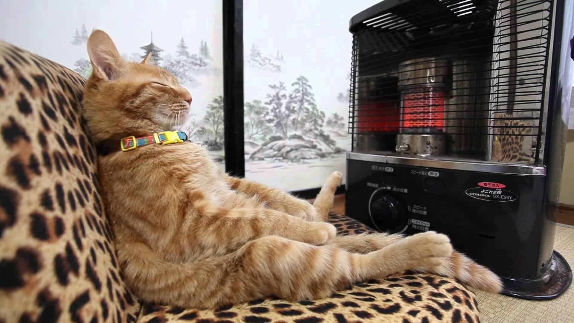 Katze entspannt vor der heizung dravens tales from the crypt for Couch vor heizung