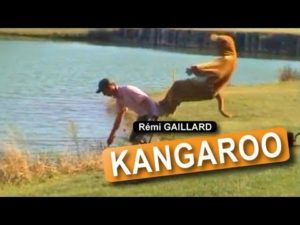 One Crazy Kangaroo