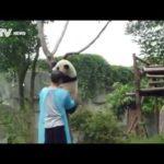 recoger Panda