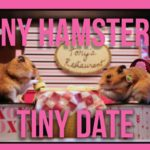 Tiny Hamster sin lille Dato