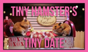 Hamster do Tiny Tiny Data