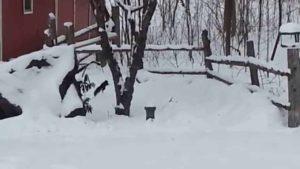 Besoffenes Eichhörnchen