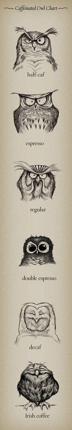 Caféiné Owl Graphique
