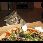 Cats, which steal Pizza