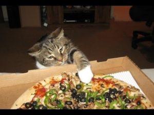 Katzen, welche Pizza klauen