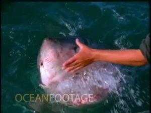 Mann streichelt einen Weissen Hai