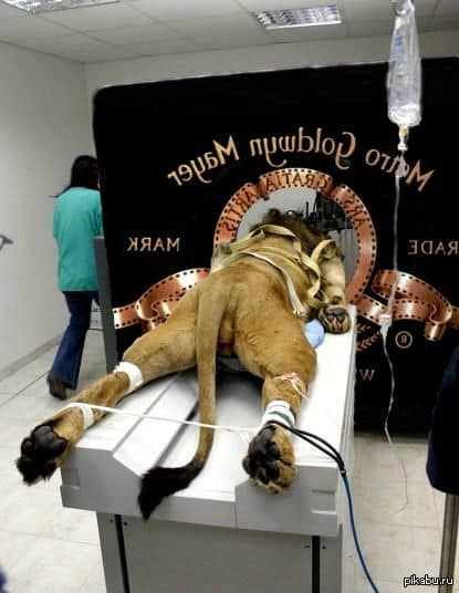 Le Lion de la Metro Goldwyn Mayer