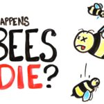 What's on, if all the bees die?