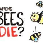 Hva skjer, hvis alle biene dør?