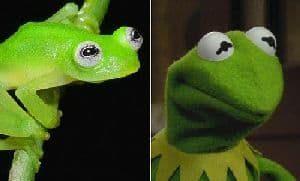 Kermit in echt - Real Life Kermit