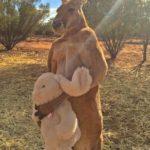 Das Känguru mit seinem Teddy