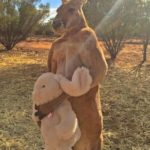 The kangaroo with his teddy