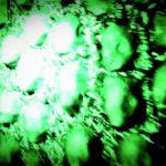 DBD: Aprire Coffin Orgia – Six Feet Under
