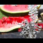 Flüssiges Aluminium in Wassermelone gegossen