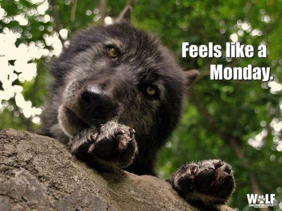 Feels like a Monday!