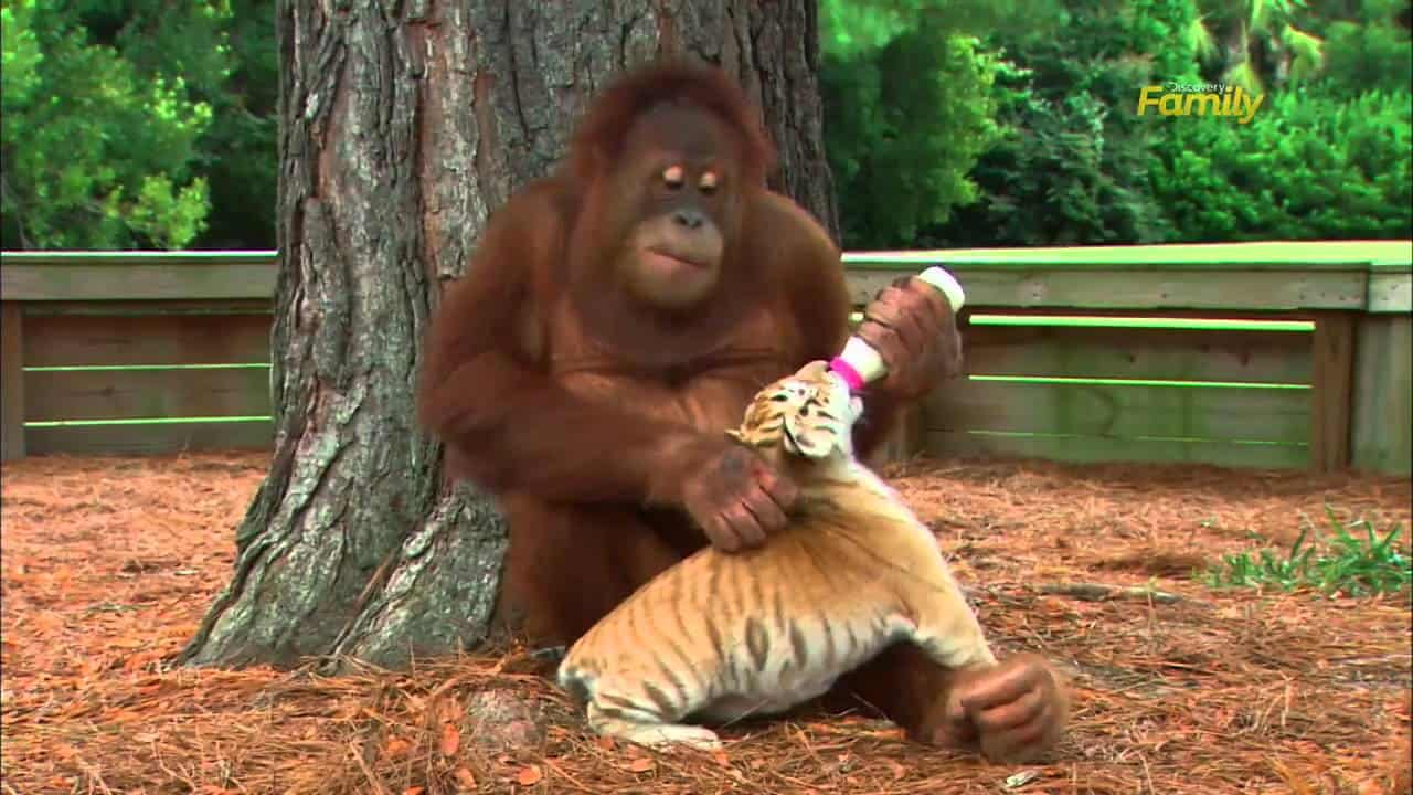 Orang utan tube sex anime films