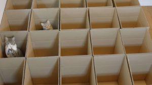 Kätzchen im Karton-Labyrinth