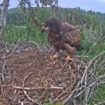 The Eagle has landed – and if it is clearly embarrassed!