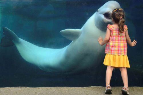 Juno de beluga