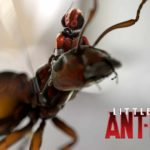 Little Ant-Man and his struggle against the predatory ladybird