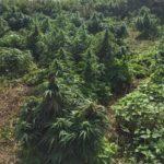 De marihuana Bos van Londen