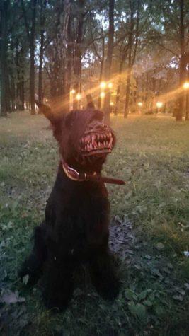 Weerwolf snuit