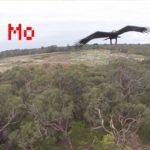 Adler prend drone dans l'air