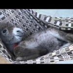 Babyesel in der Hängematte