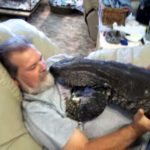 Comfortable cuddle with a monitor lizard and watch TV