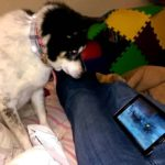 Dog Missy enjoys at Wolf Videos
