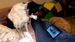 Dog Missy goza no lobo Vídeos