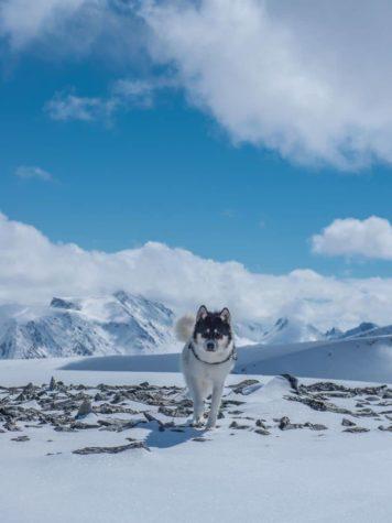 Ich habe meinen Job gekündigt, att uppleva äventyr med Huskies