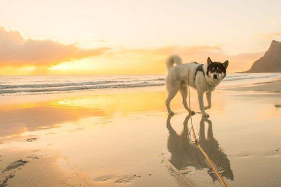 Ich habe meinen Job gekündigt, Huskies ile macera yaÅŸamaya