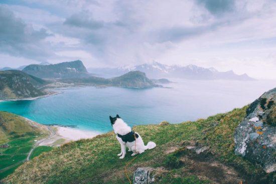 Ich habe meinen Job gekündigt, per vivere l'avventura con Huskies