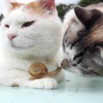 Schnecke chillt mit Katzen