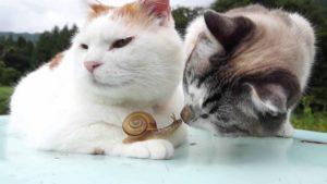Chillt Caracol con los gatos