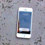 Smartphone lässt beim Klingeln eine Ameisenkolonie im Kreis laufen