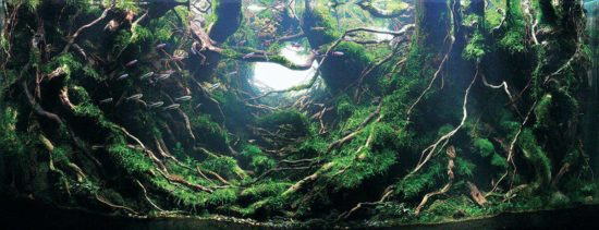 #5 Ye Yi, Chiny / DziÄ™ki uprzejmoÅ›ci IAPLC & Aquabase
