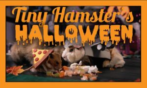 Halloween beim kleinen Hamster