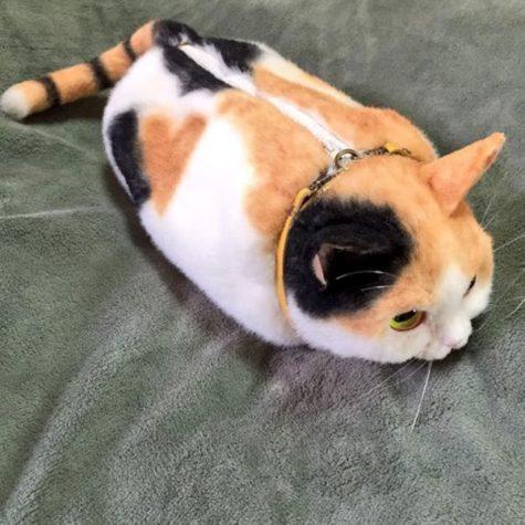 Saco do gato