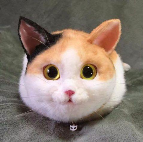 Torba Cat